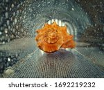 A Shell In A Dark Glass Tunnel...