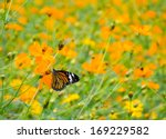 Black And Orange Butterfly Wit...