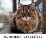 Cat In Catio   Outdoor Cat...