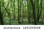Interior Of A Dark Forest With...