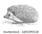 cute hedgehog pencil sketch on... | Shutterstock . vector #1692390118