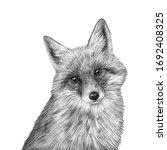 Cute Hand Drawn Fox Portrait....
