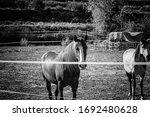 Horse Quiet In Park   Animals...