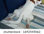 Dog Paws Showing Pads. Closeup...