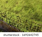 Green Thick Moss On Stone Wall...