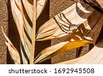 """trachycarpus"" dry leaves on... | Shutterstock . vector #1692945508"