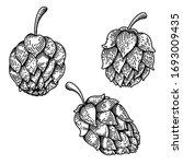 set of illustrations of beer...   Shutterstock . vector #1693009435