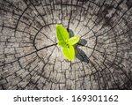 new development business concept | Shutterstock . vector #169301162