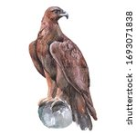 Watercolor Eagle  Bird Animal...