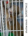 A Small Squirrel In A Cage