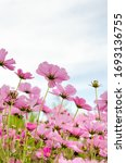 Colorful Flower Field Where...