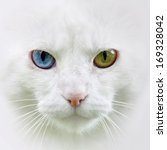 Stock photo cat with different colored eyes unusual 169328042