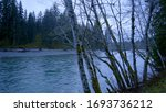 Hoh River at in the rain forest near Forks - Olympic National Park