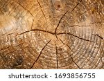 Tree rings old weathered wood...