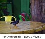 beautiful bird  wildlife ... | Shutterstock . vector #1693974268