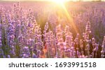 beautiful image of lavender... | Shutterstock . vector #1693991518