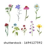 Wildflower Meadow Collection....