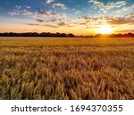 Beautiful Sunset And Field Of...