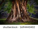 Detail Of Old Vintage Tree...