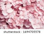 Hydrangea Background. Pink...