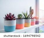 Cactus Pot. Concrete Pot. Close ...