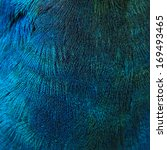 A Closeup Of The Blue Feathers...