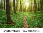 spring forest landscape with... | Shutterstock . vector #1695085018