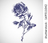 Vintage Hand Drawn Rose. Vecto...