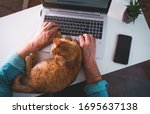 Man is typing on laptop with ginger cat sleeping on keyboard. Top view. Man working from home on laptop in wireless headphones. Home office with pet cat