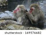 Snow Monkey Or Japanese Macaqu...