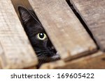 Stock photo beautiful european cat in a delivery box 169605422