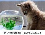A Beautiful Fluffy Kitten Is...