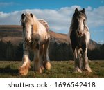 Wild Horses On A Mountain In...