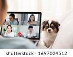 Small photo of Back view of business woman and team on laptop screen talking and discussion in video conference and dog interruption.Working from home, Working remotely, Pets interruption and Self-isolation.