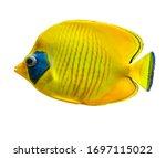 Fish Aquarium Tropical Yellow...