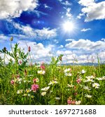 Beautiful flower meadow in summer with bright  daisies under a blue sky with sun to relax and meditate in Germany, Europe.  - stock photo