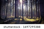 Forrest Woods Tree And Sunlight