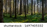 Panorama Of Green Forest...