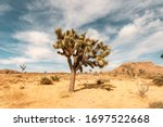 Single Joshua Tree In Desert Up ...