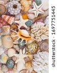 White Corals  Starfishes  Sea...