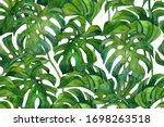 fresh green monstera leaves on... | Shutterstock . vector #1698263518