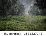 Heavy Rain In The Botanical...