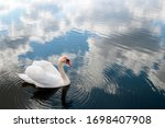 White Majestic Swan Swim Ahead...
