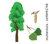 Vector Illustration Of Poplar...