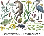 lake wildlife collection ... | Shutterstock .eps vector #1698658255