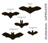 bats with names  greater and... | Shutterstock .eps vector #1699014295