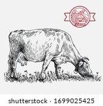 breeding cow. animal husbandry. ...   Shutterstock .eps vector #1699025425
