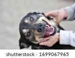Small photo of smile of happy dog in the arms of the loving hands of the hostess. dog portrait