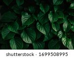 Dark Green Leaves Background Of ...