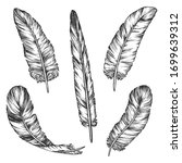 set of vector bird feather... | Shutterstock .eps vector #1699639312